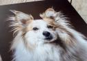 hondenfotograaf afdruk dibond