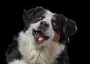 hondenfotograafhondenfotografie koekjes vang