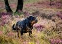 hondenfotografie op locatie