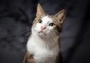 katttenfotografie in studio