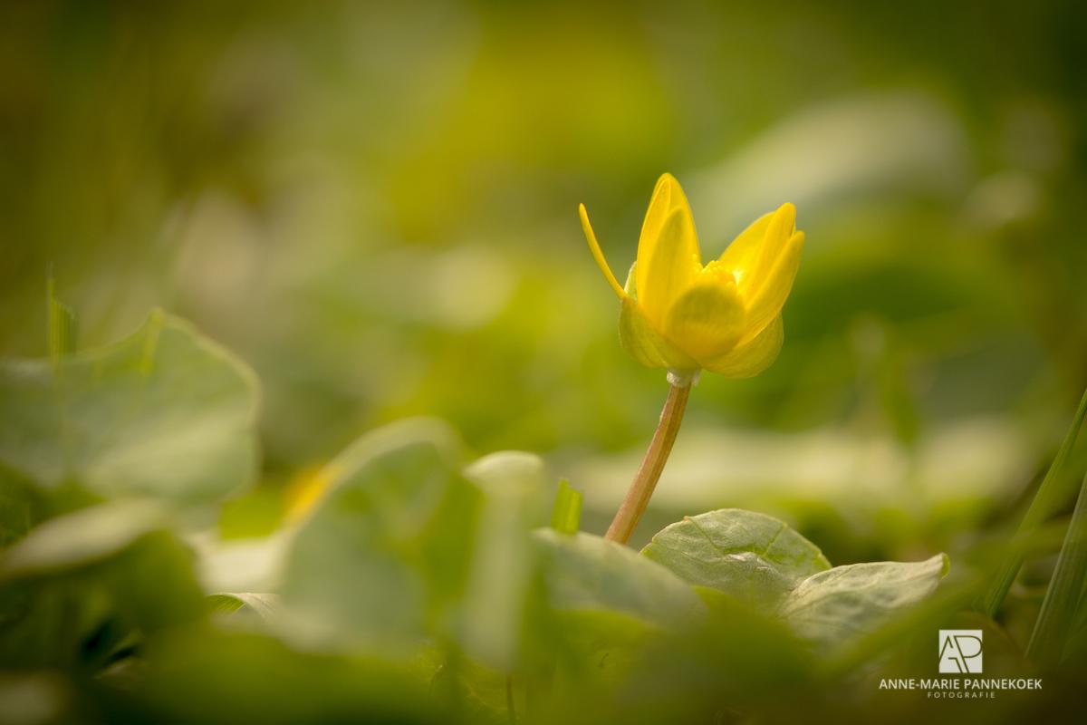geel lente bloem