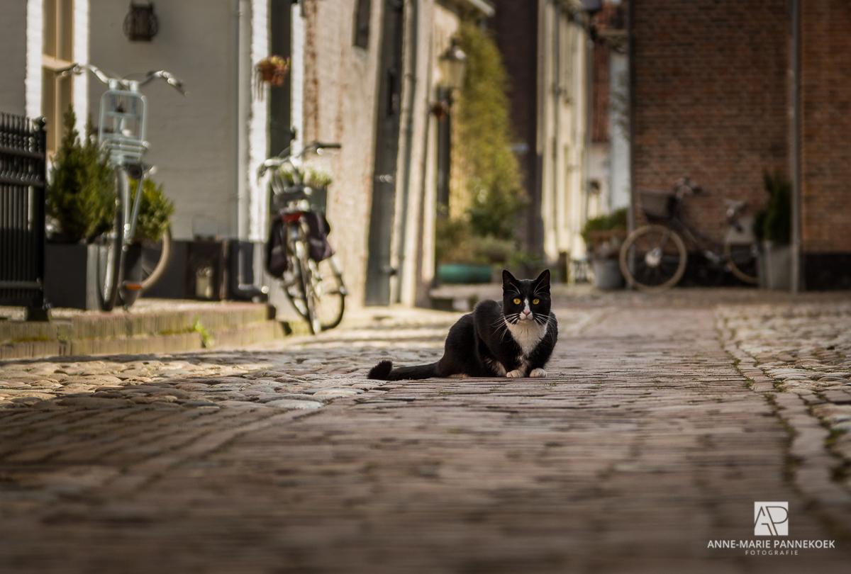 Kat op een straat in Elburg