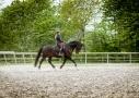 paardenfotografie onder het zadel