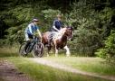 Paardenvierdaagse Epe, paardenfotografie