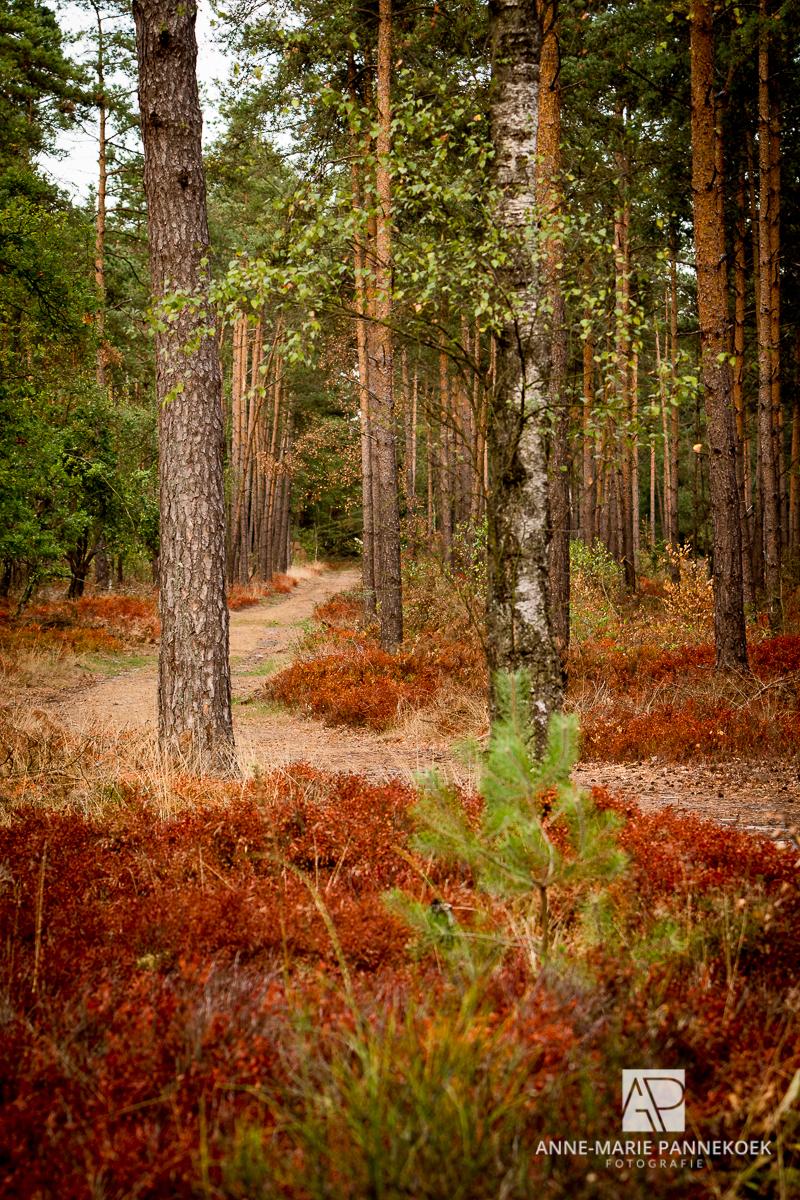 Bos na een droge zomer