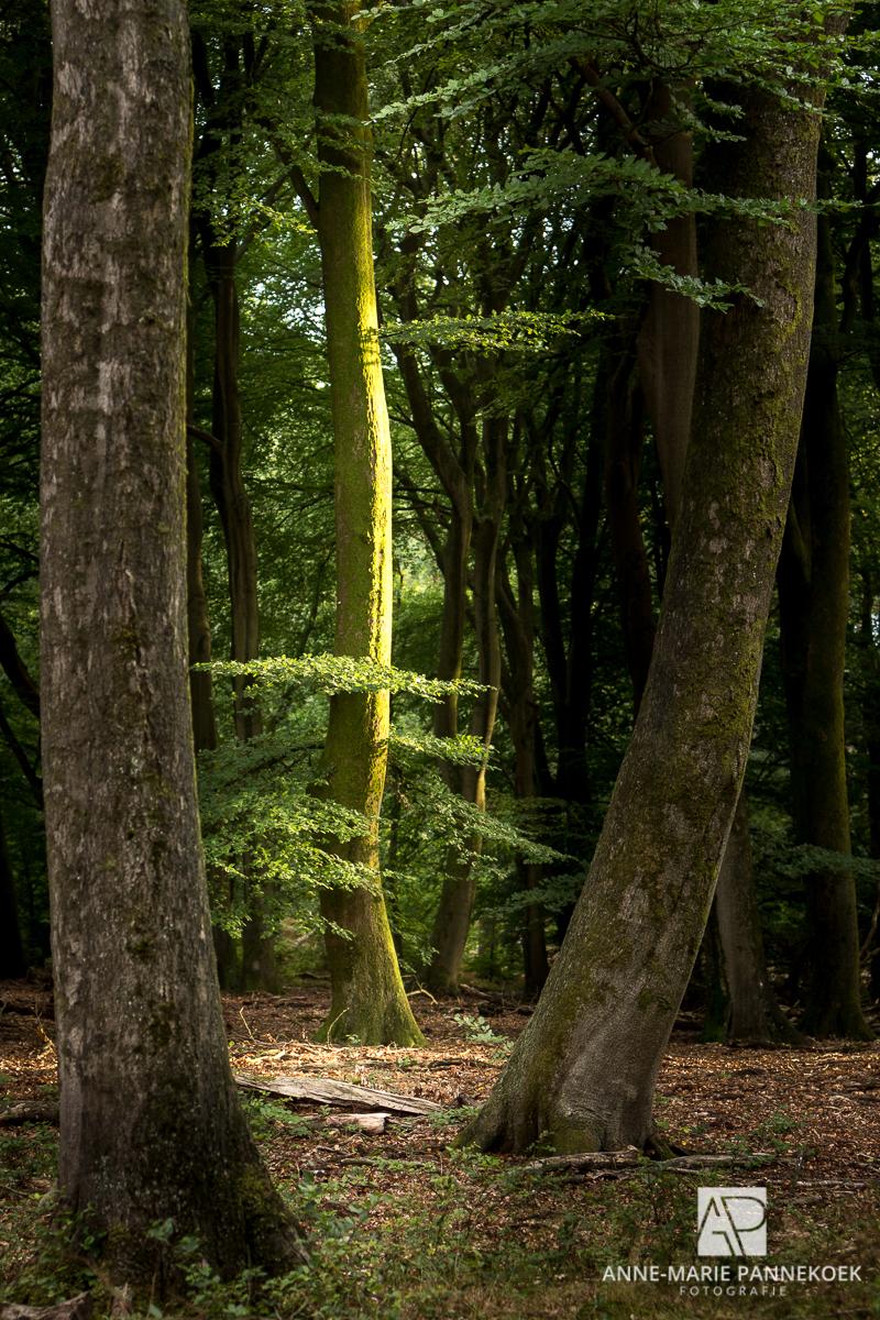 Bos in de avond met zon
