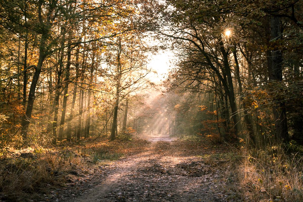 Bos bij Gortel Vaassen zonnestralen