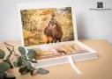 Fotobox paardenfotograaf Vaassen